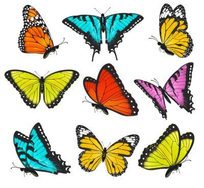 Plakát Set of colorful butterflies illustration