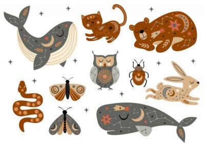 Plakát set of isolated celestial animals