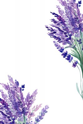 Plakát set of lavender flowers elements on an isolated white background, watercolor illustration, hand drawing, greeting card with a place for text