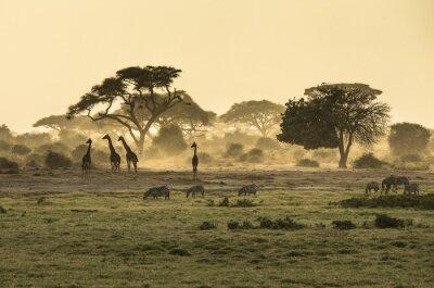 Plakát Silhouette di žirafa