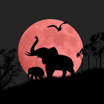 Plakát Silueta pohled slonů v noci