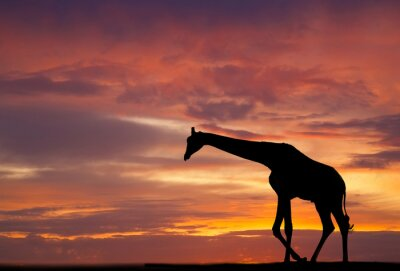 Plakát Silueta žirafy proti nádherný západ slunce