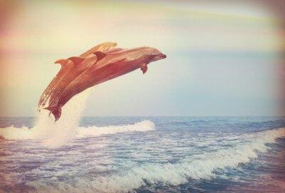 Plakát skákání delfíni, Instagram