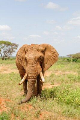 Plakát slon
