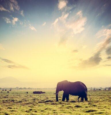 Plakát Slon na africké savaně při západu slunce. Safari v Amboseli, Keňa, Afrika