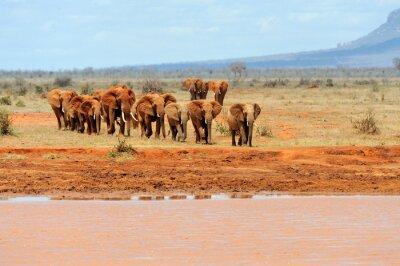 Plakát Slon v národním parku Keni