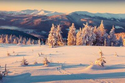 Plakát Slunečné ráno východ slunce v zimě hory. Retro styl.