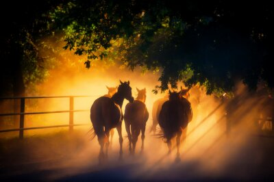 Plakát stádo koní