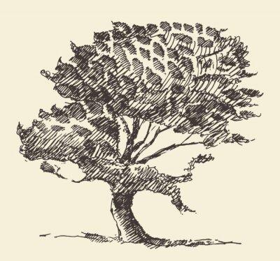 Plakát Starý strom vintage ilustrace ručně kreslenými skica