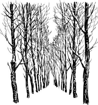Plakát Stromy v zimě parku