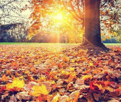Plakát Sunny podzimní listí