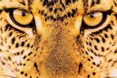 Plakát textury zblízka tiskové látkové pruhy leopard