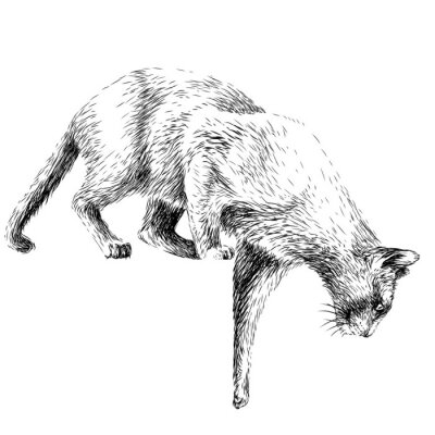 Plakát  The cat jumps down. Wall sticker depicting a jumping cat.