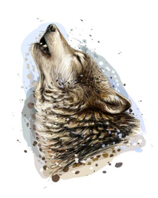 Plakát The wolf howls. Sketchy, graphical, color portrait of a wolf head on a white background with splashes of watercolor.