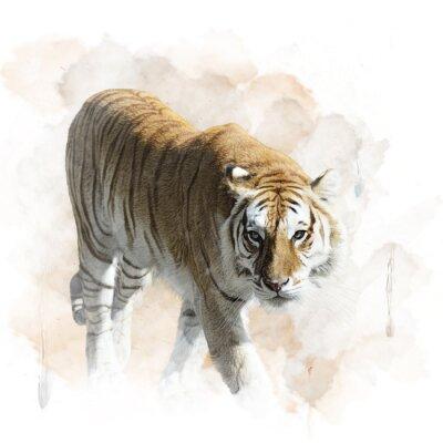 Plakát Tiger Chůze