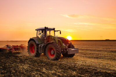 Plakát Traktor na poli ječmene od západu slunce.