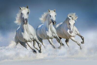 Plakát Tři bílý kůň běžet cval na sněhu