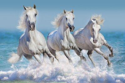 Plakát Tři bílý kůň běžet tryskem ve vlnách v oceánu