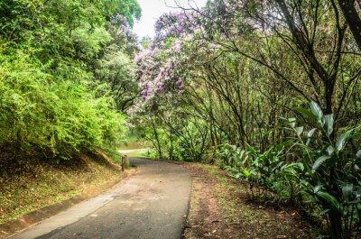 Plakát trilha entre árvores em um Parque em São Paulo