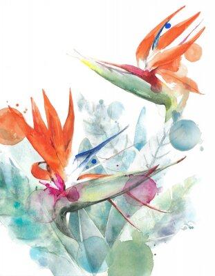 Plakát Tropické květiny pták raja strelitzia akvarel malba ilustrace izolovaných na bílém pozadí