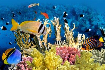 Plakát Tropické ryby a Coral Reef