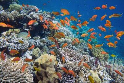 Plakát Tropické ryby na korálovém útesu