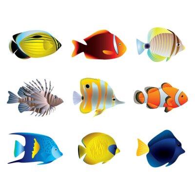 Plakát Tropické ryby vector set