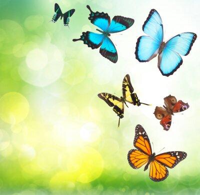 Plakát Tropických motýlů v zahradě