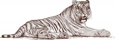 Plakát tygr ležící