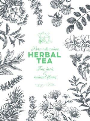 Plakát Vector hand drawn tea herb Illustration.