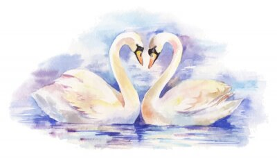 Plakát vektor akvarel ilustrace pár bílých labutí