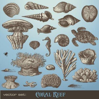 Plakát vektoru set: korálový útes - různé moře-konstrukční prvky