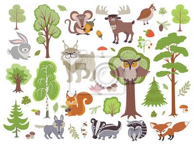 Velka Sada Divokych Lesnich Zvirat Ptaku A Stromu Kresleny Les