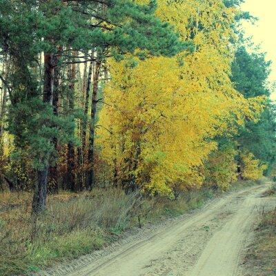Plakát Venkovské silnici v krásném podzimním lese