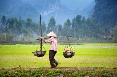 Plakát Vietnamci farmář z rýže neloupané pole v Ninh Binh, Tam Coc. Ekologické zemědělství v Asii