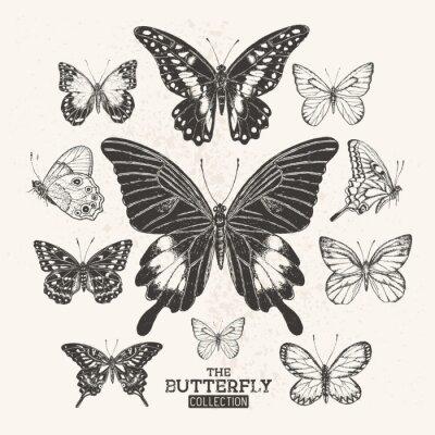 Plakát Vintage Butterfly Collection