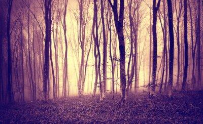 Plakát Vintage fialový žluté barvy mystik světlo v děsivé lesní krajině.