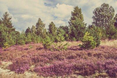 Plakát Vintage foto vřesu v lese, venkov krajiny.