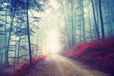 Plakát Vintage magic lesní cesta
