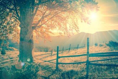 Plakát Vintage podzimní strom při západu slunce s paprsky, hory