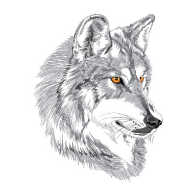 Plakát Vlk čenich skica