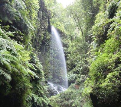 Plakát Vodopád Cascada Los Tilos (La Palma, Kanárské ostrovy)