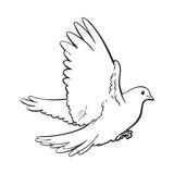 Kresba Letajici Vrana Samostatny Nacrtek Ptaka Plakaty Na Zed