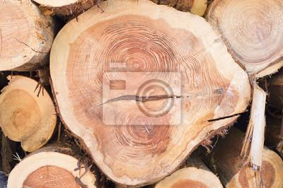 Plakát Vyčesané dřevo