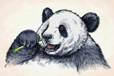 Plakát vyrýt inkoustu draw panda ilustrační