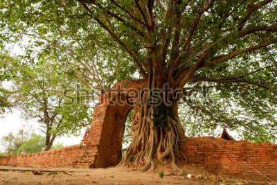 Plakát Wat Phra Ngam (opuštěná) Ayutthaya brána času Oblouk je obklopen pho.