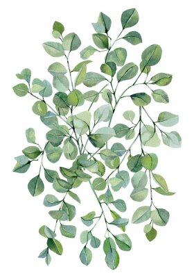 Plakát Watercolor banner background with hand painted silver dollar eucalyptus. Green branches and leaves isolated.  Floral illustration for wedding inspiration card, template, print.