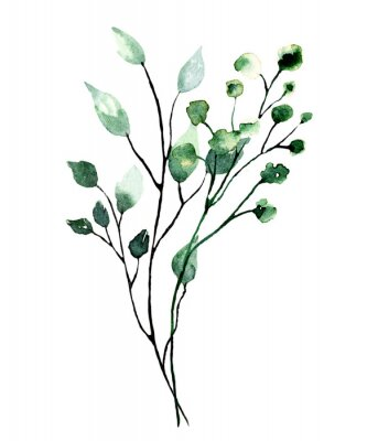 Plakát Watercolor branch with green leaves. Hand painting floral illustration. Leaf, plant isolated on white background.
