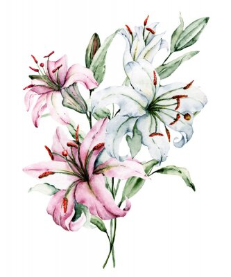 Plakát Watercolor flowers lilies. Floral bouquet, clip art. Arrangement with lily perfectly for printing design on invitations, cards, wall art and other. Isolated on white. Hand painted.