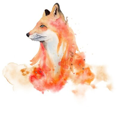 Plakát Watercolor fox  Animal illustration isolated on white background.